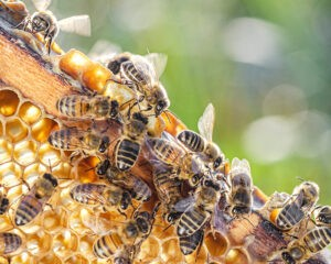 bees api